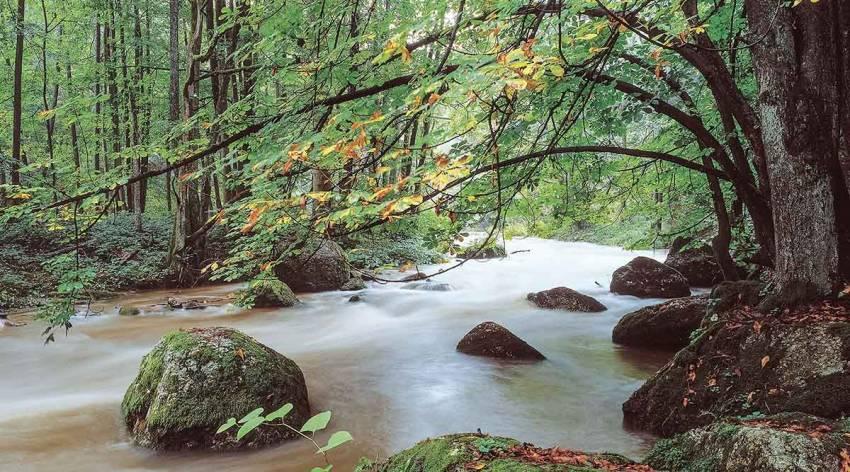 Waldbaden und Flusswandern