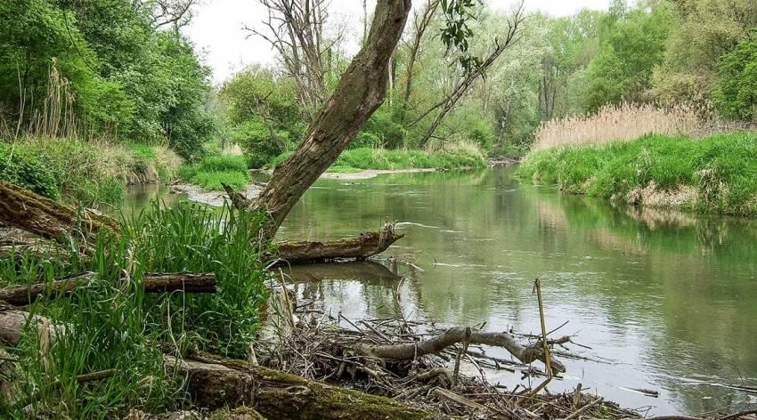 Traun-Donau-Auen