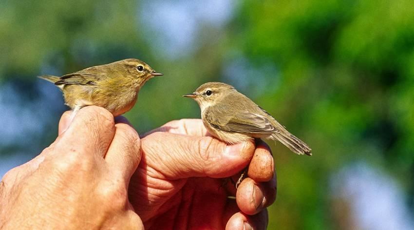 Flattern und Schnattern im Almtal - Vogelzug am Almsee