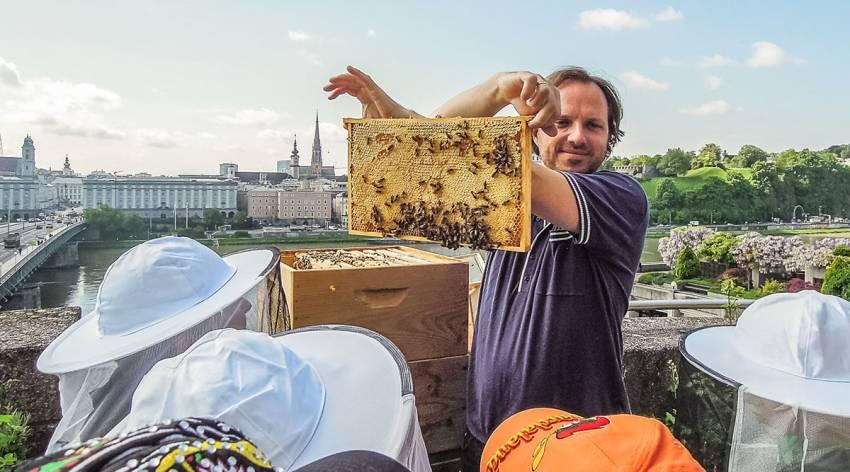 Die wilden Stadtbienen