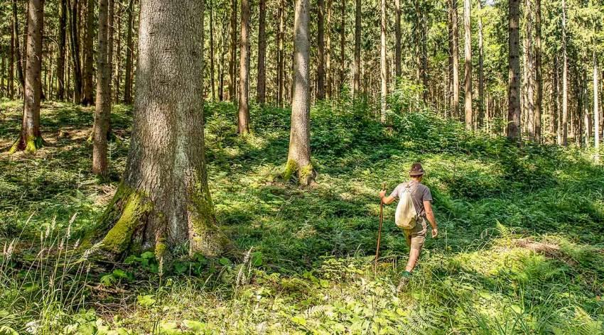 Wald der Zukunft
