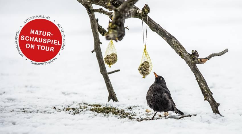 Mission Wintervögel