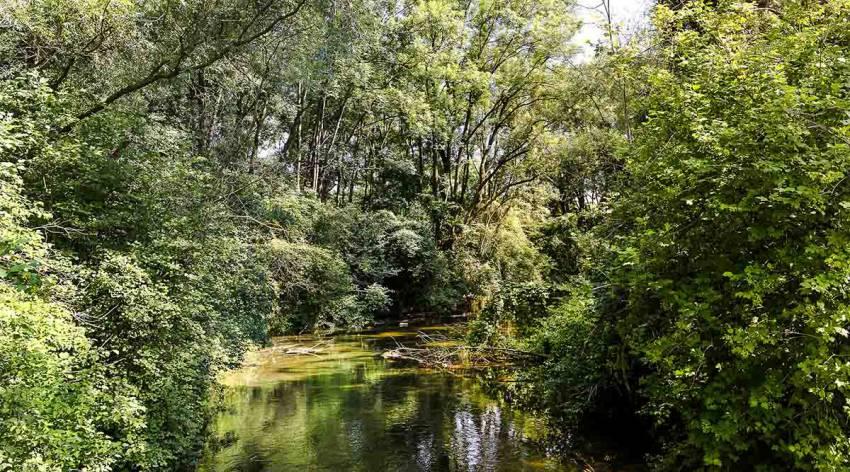 Unterwegs im Linzer Dschungel