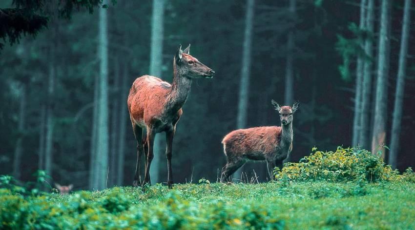 Im Tal des Rotwildes - Sommer