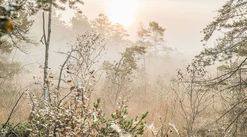 Pfeiferanger im Ibmer Moor
