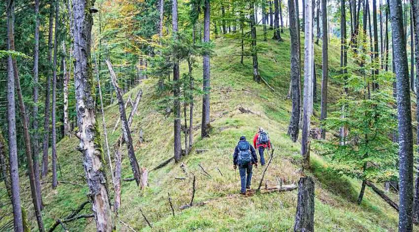 Am Weg zur Waldwildnis