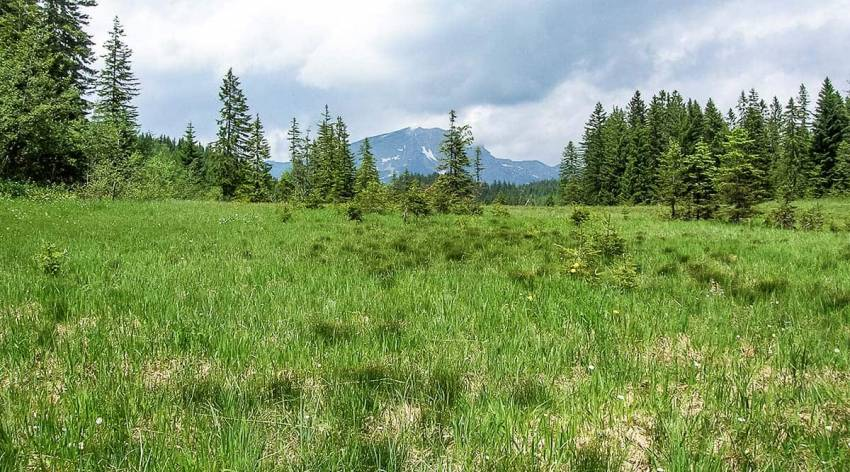 Hornspitzmoore (Bibereck)