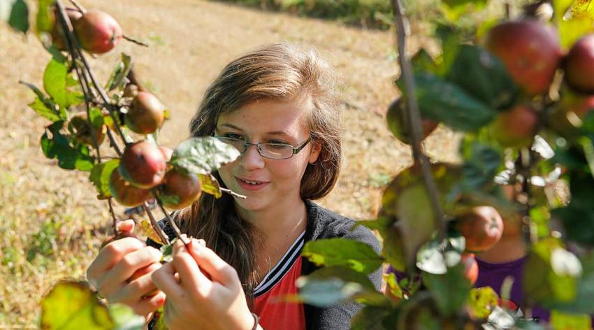 Expedition Streuobstwiese - Herbst