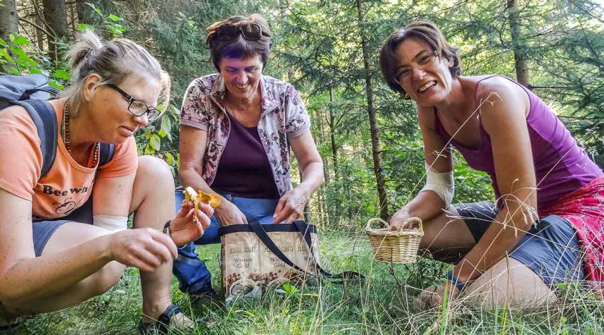 Baumschätze und Waldköstlichkeiten
