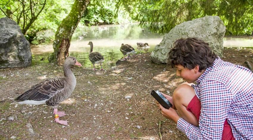 Flattern und Schnattern im Almtal - Bürger schaffen Wissen